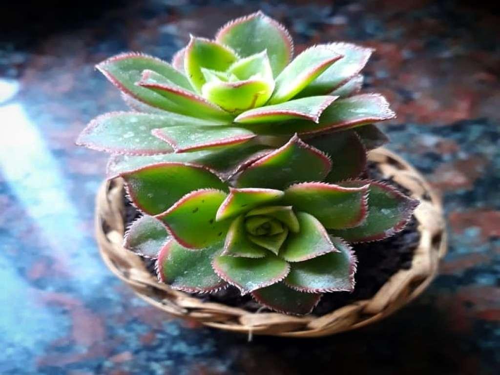 Souvenirs plantas decorativas y kokedamas
